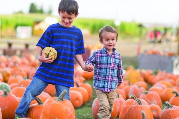 Two boys walk through a pumpkin patch